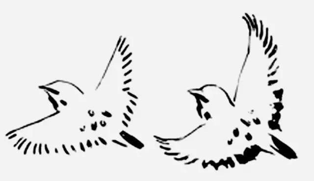 花鸟画技法精讲(6)