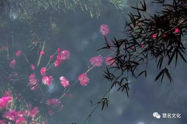 中国最有趣的姓氏都在这儿了,看看有你的吗?——植物