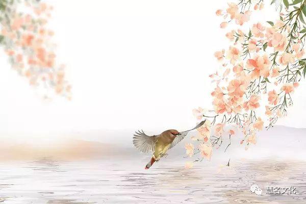 姓氏文化之复姓的来源与发展——花鸟