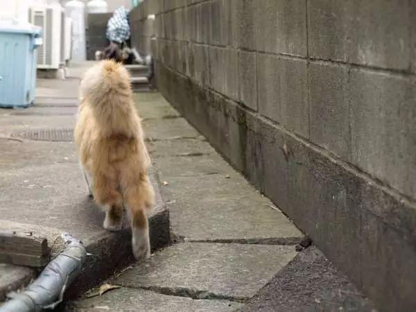 换个视角,跟着喵去散步吧~