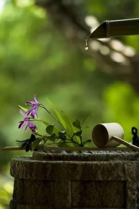 春曉庭院禪意日式風格