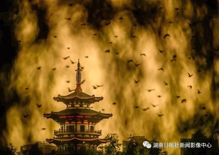 湖南日报社新闻影像中心2017年度图片:时光长情 少年不老 新湖南www.hunanabc.com