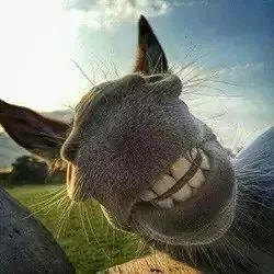 裂牙笑表情
