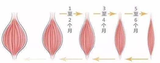 咬肌萎缩过程