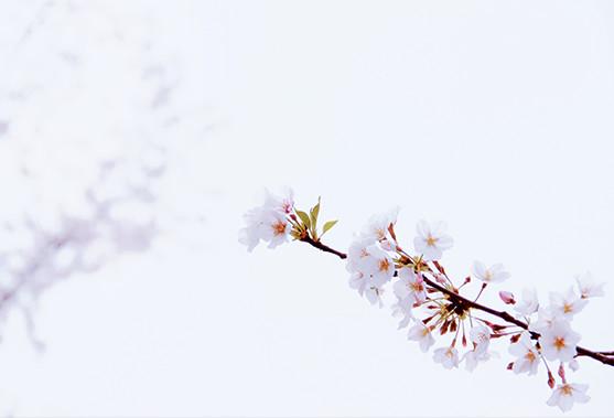 日语旅游基本日常用语谐音 日语100个常用语插图2